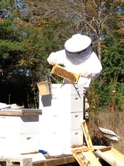 Beekeeper inspecting a new beehive at Upper Cumberland Apiary