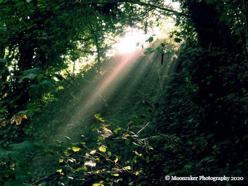 Photograph focused on the light streaming through the foliage in the middle of the woods.