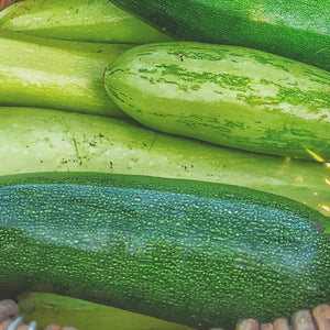 Courgette Green (each)