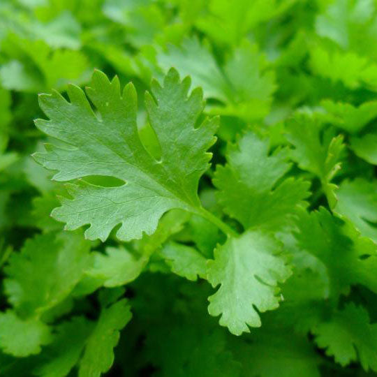Parsley (200g)