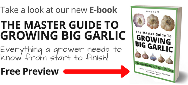 How To Grow Big Garlic Bulbs