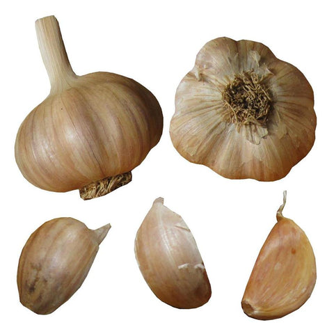 Rocambole Garlic Bulbs