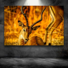 Load image into Gallery viewer, Golden Gazelle