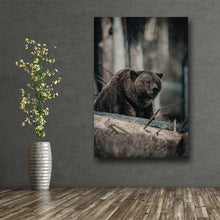 Load image into Gallery viewer, Grizzly Bear Staring in Woods