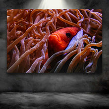 Load image into Gallery viewer, Clown Fish