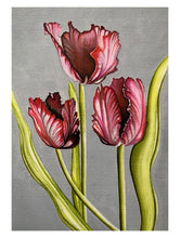 Load image into Gallery viewer, Red Parrot Tulips