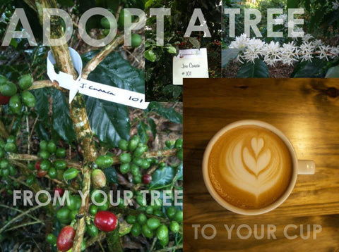 Adopt a Coffee Tree + One (1) Bag of Specialty Coffee
