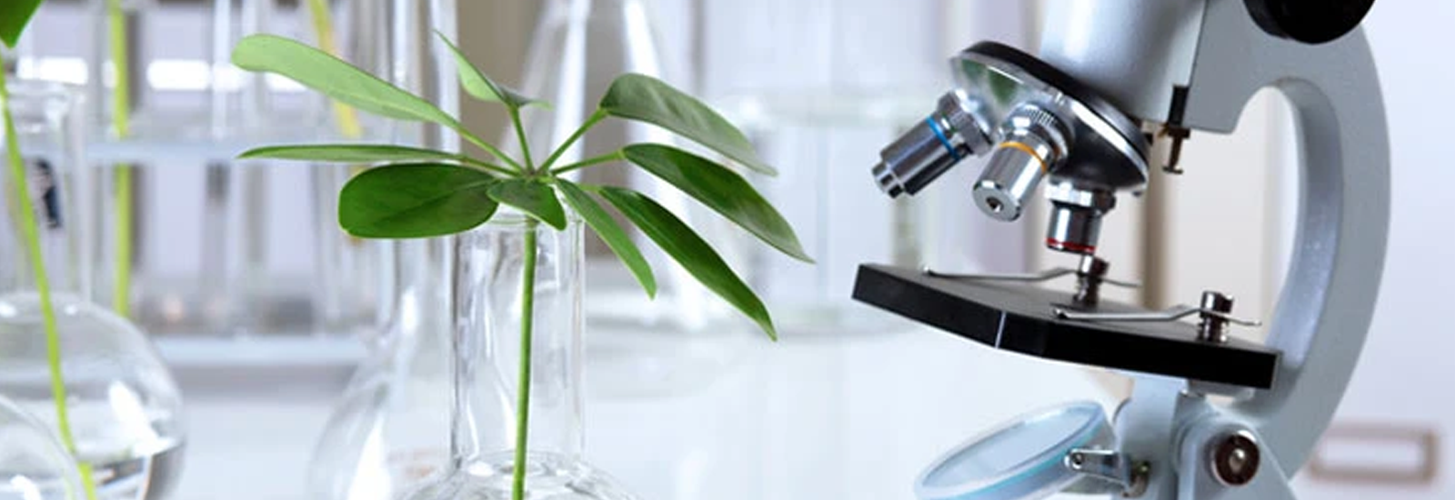 Microscope with herb - Formulating a Herbal Drug - The Himalaya Drug Company
