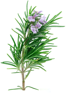 Rosemary Eucalyptus Dry Scalp Treatment