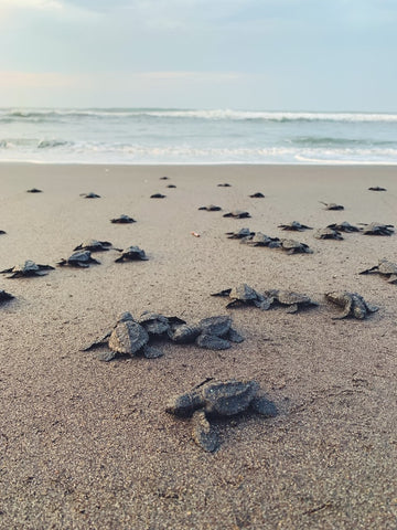 Leatherback Sea Turtle - Extraordinary Things You Can Do to Save Endangered Species - Rainbow Yoga Training