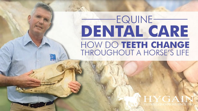 [Video] - Equine Dental Care - Teeth issues affecting horse health