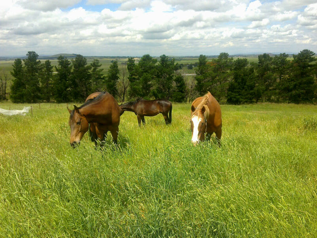 Pasture management for horses with metabolic disorders