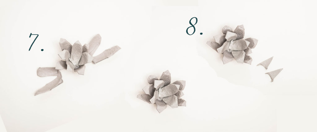 Pink Salt Riot Blog // The Best (and Easiest!) DIY Succulents - Part 1, With a Secret Ingredient You Won't Believe