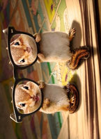 Chipmunks With Thick Glasses