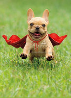 Frenchie Jumping Wearing Red C