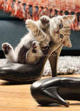 Kitten In High Heel Shoe 203056