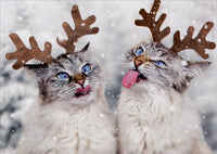 Reindeer Cats Catching Snowflakes Christmas Card