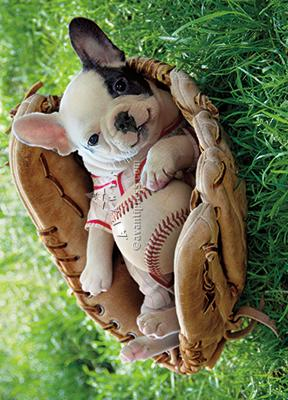 Puppy In Baseball Mitt