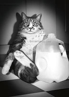 Cat With Milk Jug - Revised Ar