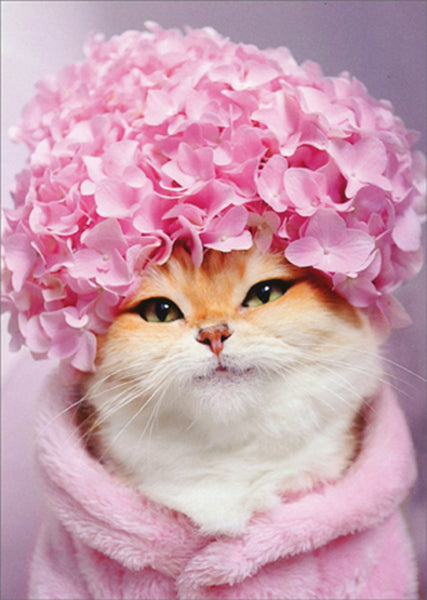 Kitty Cat with Pink Hydrangea Cap
