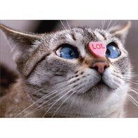 Cat Candy Heart Nose