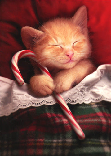 Sleeping Kitten Holding Candy Cane Cat Christmas Card