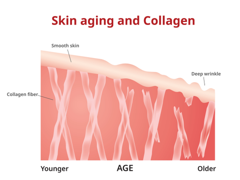 [Picture: Skin aging and collagen]