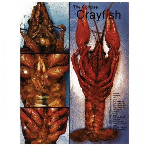 Concise Dissection Chart: Crayfish