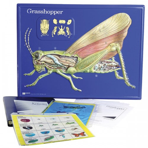 Grasshopper Model Activity Set