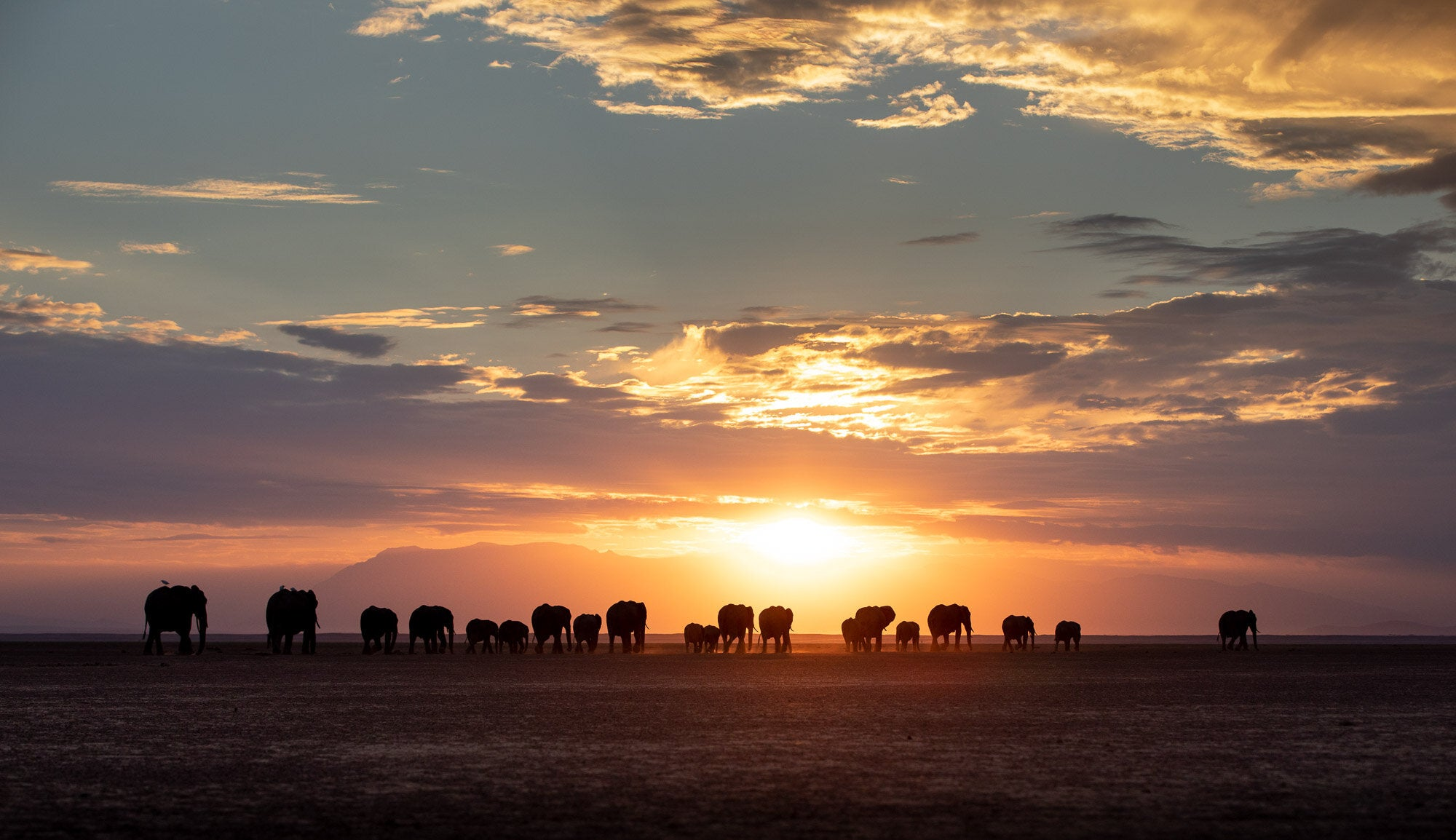Beginner's Guide to Nature Photography: Elephant Procession