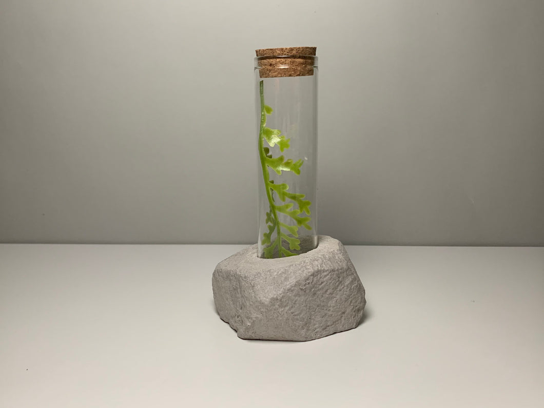 Concrete And Glass For A Fresh Flower - Home Decor - Gift - Plant - Pot - Round - Square - betonven