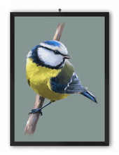 Load image into Gallery viewer, Blue Tit Bird Art Print