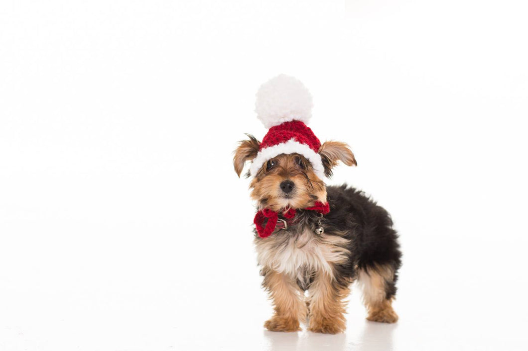 In-Stock Traditional Santa Hat for Toy Dogs