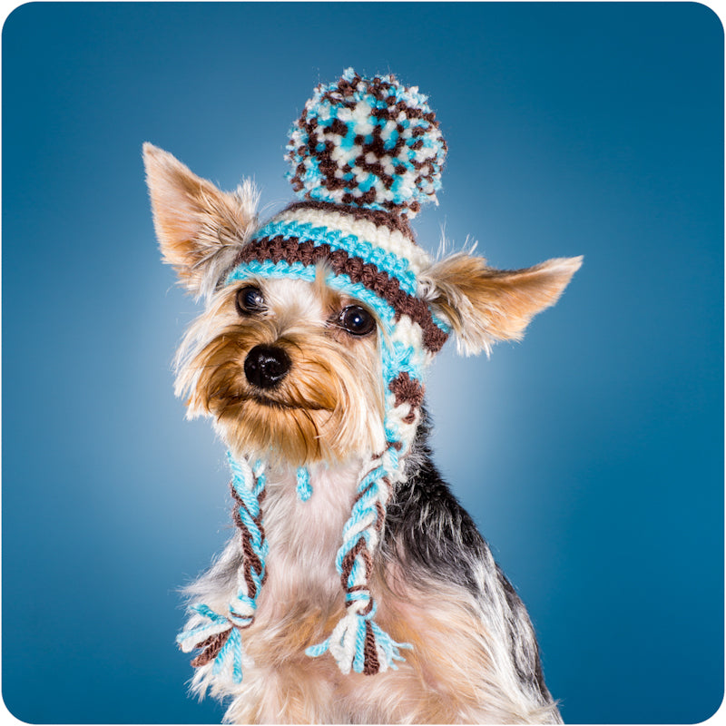 Traditional Dog Toques for Toy Dogs