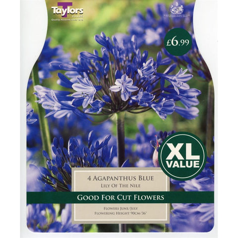 XL Agapanthus Blue