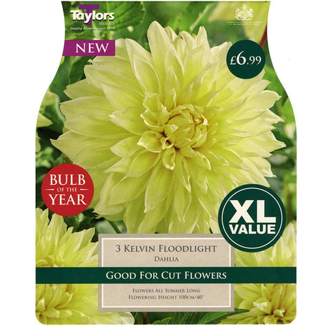 XL Dahlia Kelvin Floodlight