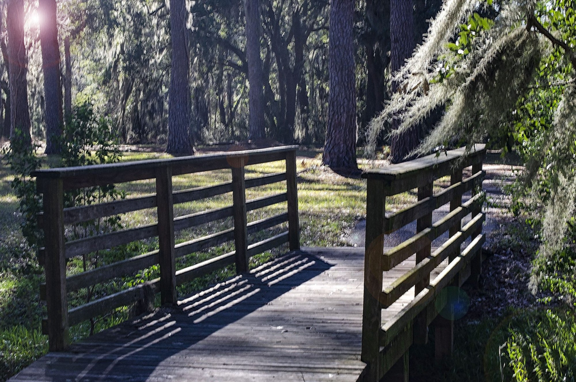 "alt=""bridge with trees showing finding a biblical purpose"""