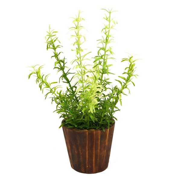 Artificial Plant Asparagus in small round wood pot - Fancy Mart