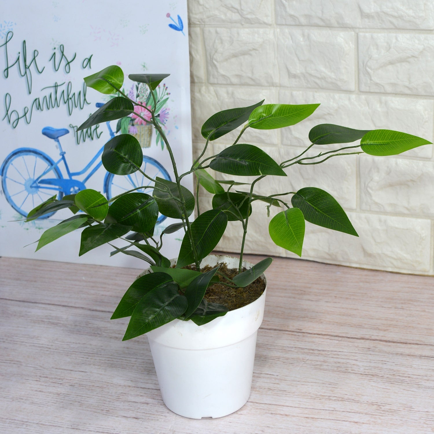 Artificial Ficus Spray in Cone pot (Height : 30 cm)
