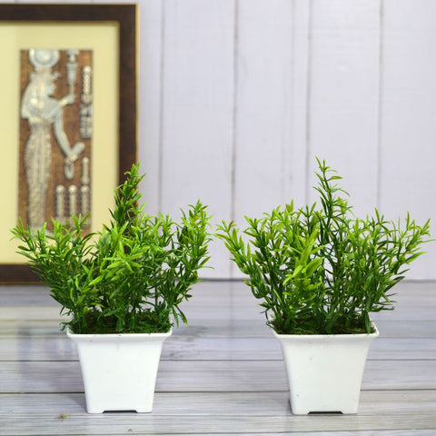 Artificial Spery Grass (Set of 2 ) in Gamla Pot (Height : 17 cm)
