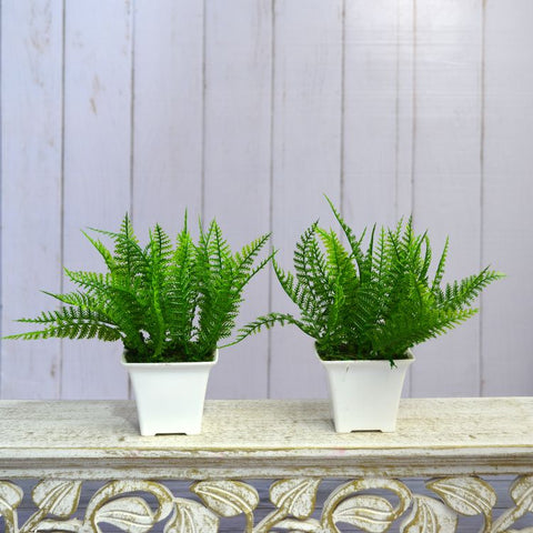 Artificial Christmas Leaves (Set of 2) in Gamla Pot (Height : 17 cm)