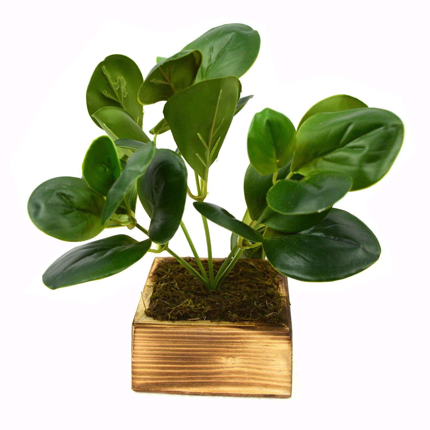 Artificial Green Leaves Rubber Plant in Wood Square pot - Fancy Mart