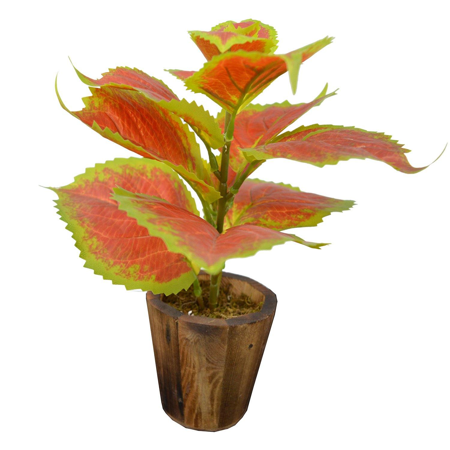Artificial Colius plant in wood pot