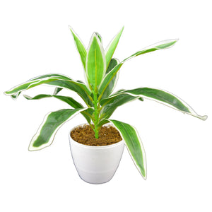 Artificial Dracina plant in white round pot - Fancy Mart