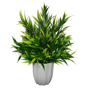 Artificial Bamboo in round Long pot - Fancy Mart