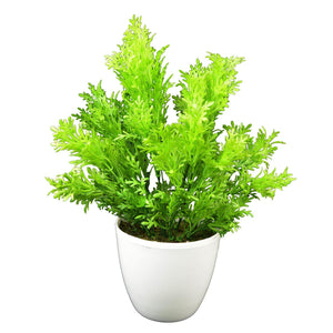 Artificial Plants Parsley Leaves in White Round Pot - Fancy Mart