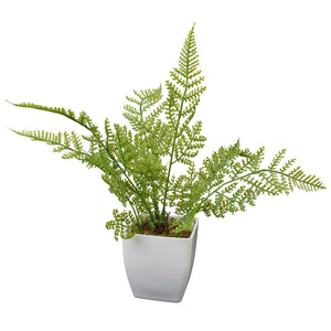 Artificial Plants Lady Fern Leaves in White Square Pot - Fancy Mart