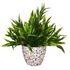 Artificial Bamboo Plant in Round Texture Pot - Fancy Mart
