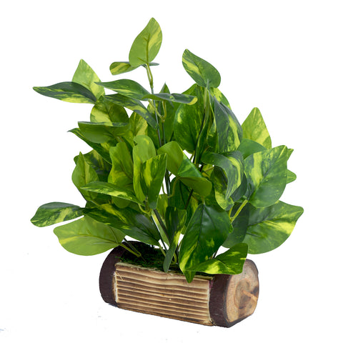 Artificial Money Plant in Wood Buckle Pot