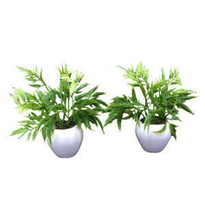 Artificial Palaplai Plant (set of 2)  With Small Apple Pot